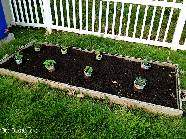Planting the Vegetable Garden of 2013