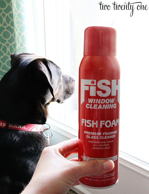 Fish Foam Review