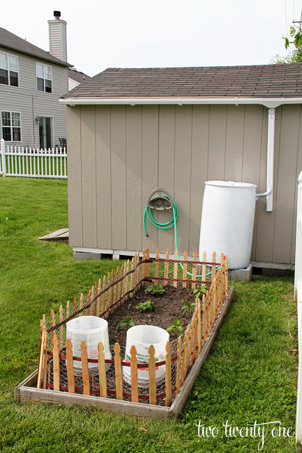 Rain barrel for vegetable garden