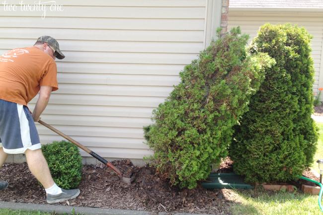 goodbye dead shrub