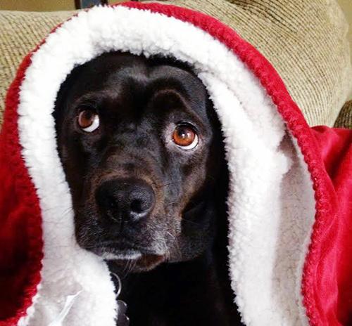 jack in blanket