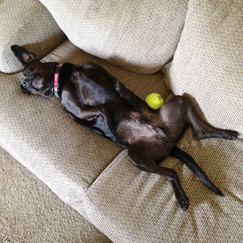 jack on couch