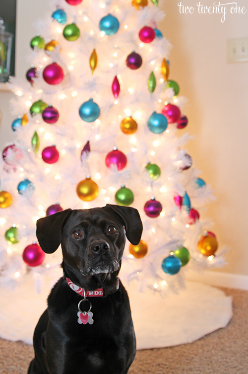 jack in front of christmas tree 2013