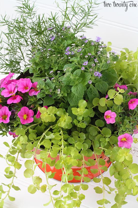 colander flowers