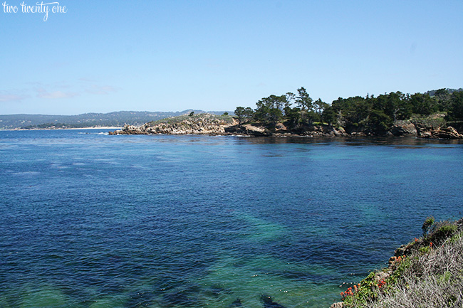 point lobos 14