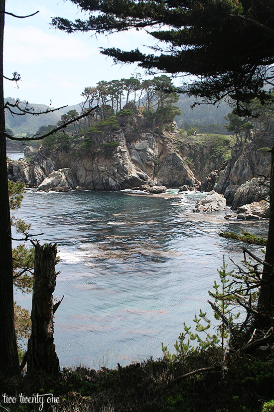 point lobos 9