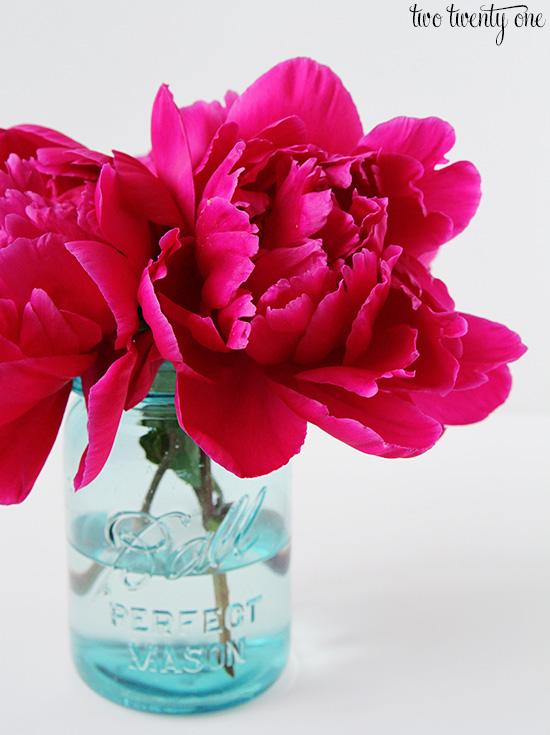 fuschia peonies in vase