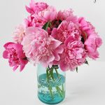 peonies in blue mason jar