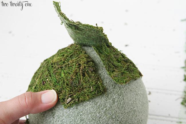 moss balls 4