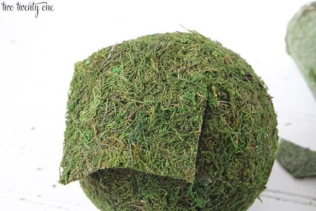 moss balls 7