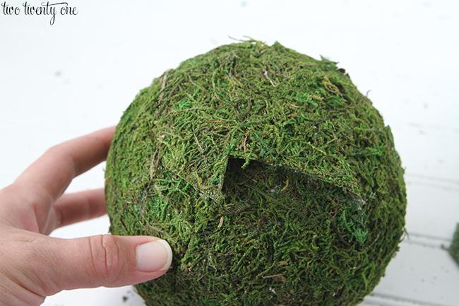 moss balls 9