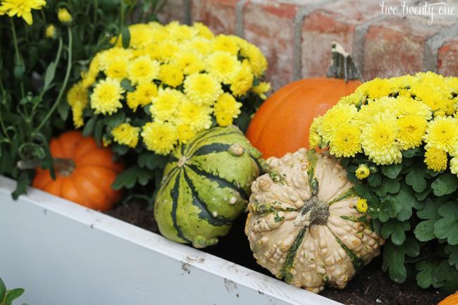 fall flower window box 1