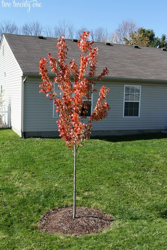 how-to-plant-a-tree2