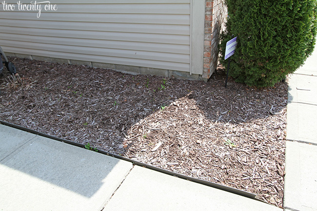 front landscaping 1