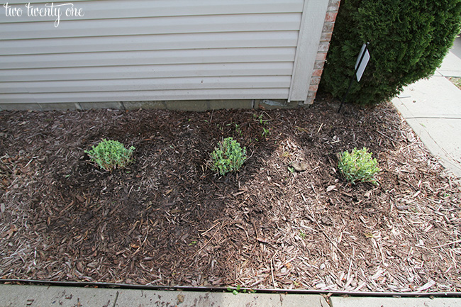 front landscaping 3