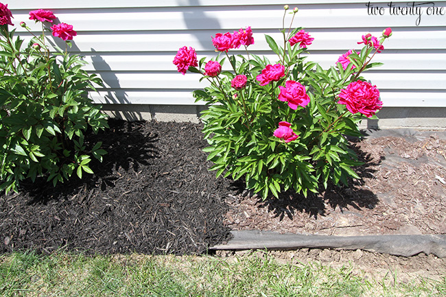 landscaping during 1
