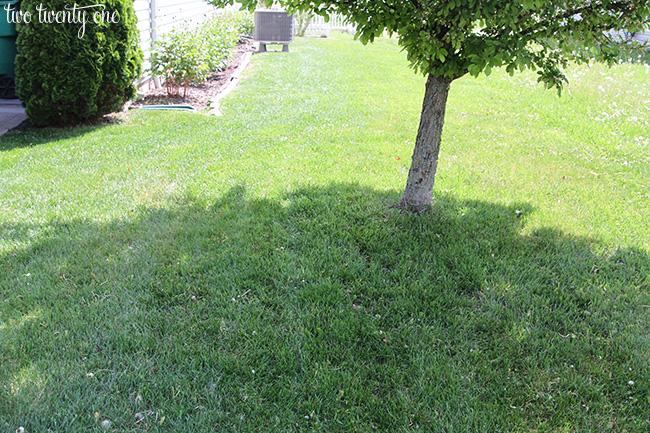 lawn may 1