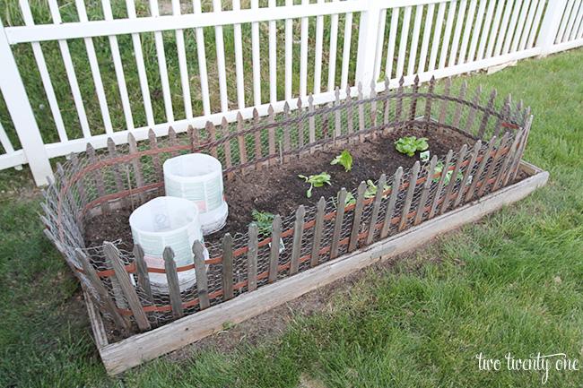 vegetable garden 2015 1