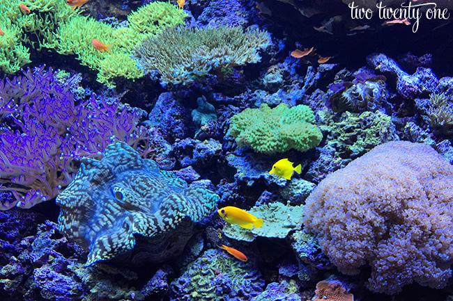 seattle aquarium 6