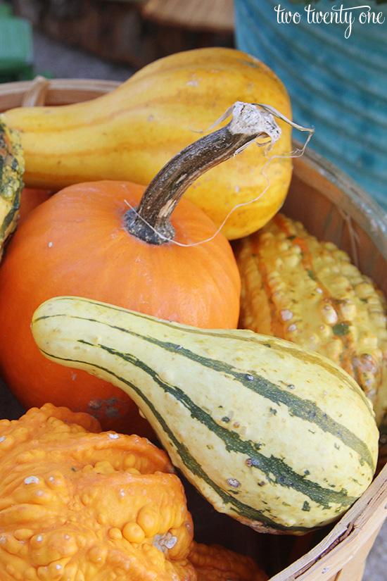gourds in apple basket