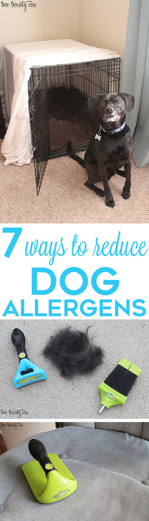 7 ways to reduce dog allergens! Great tips!