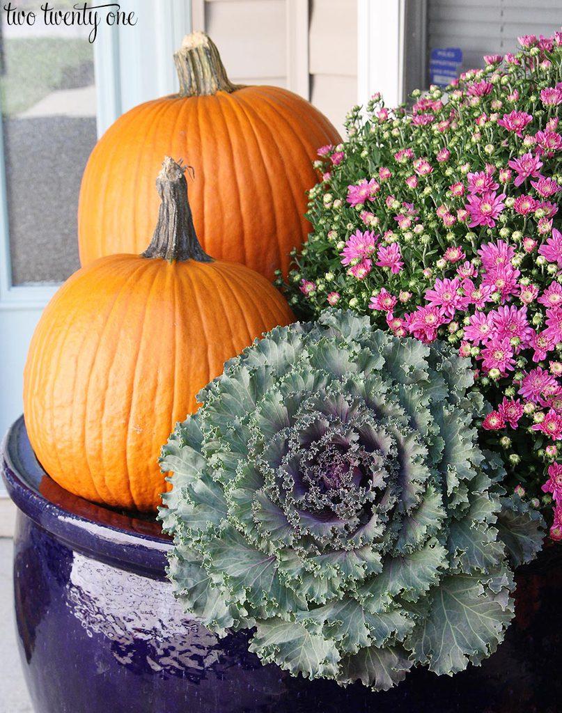 pumpkin-cabbage-and-mums