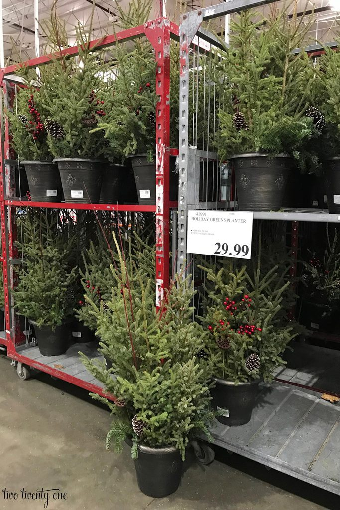 Costco Christmas planters