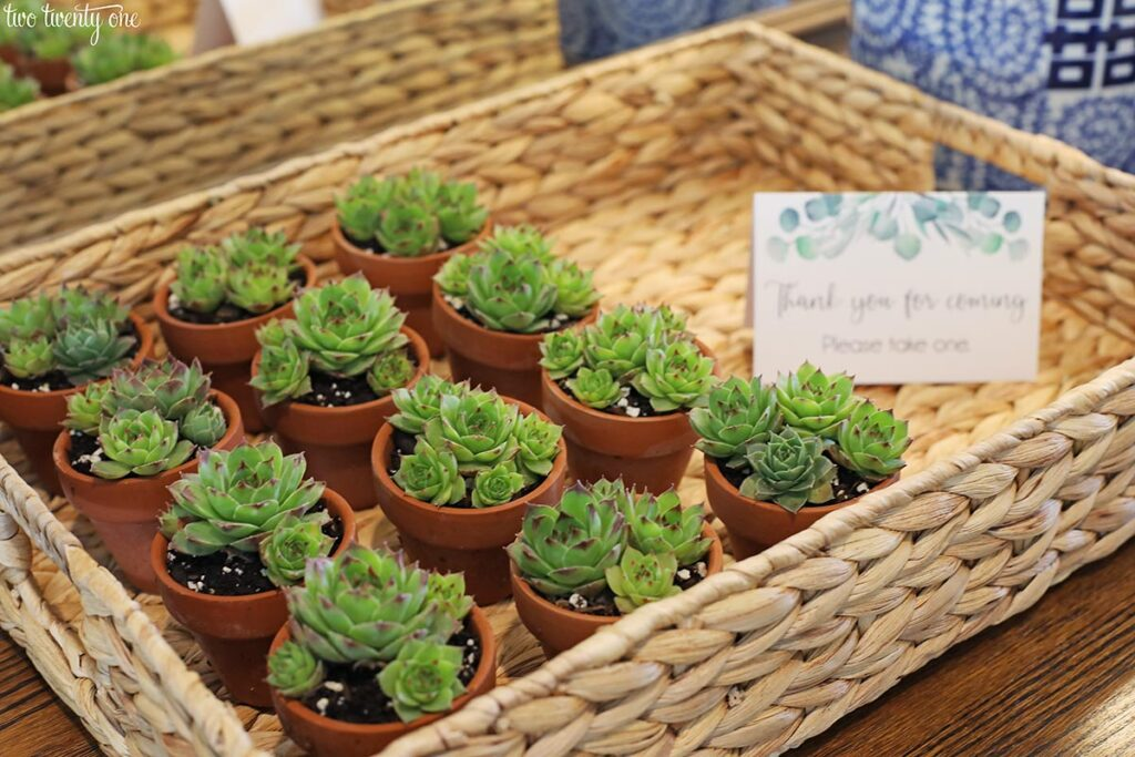 succulent baby shower favors