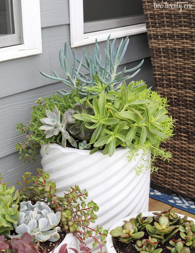 outdoor planter tip