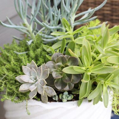 Outdoor Planter Tip + Easy Succulent Planters