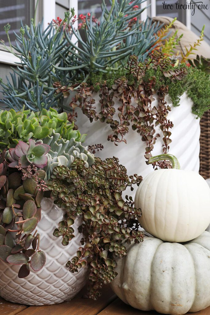 succulents with pumpkins