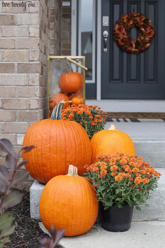 pumpkins and orange mums