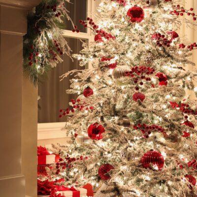 Christmas Night Tour