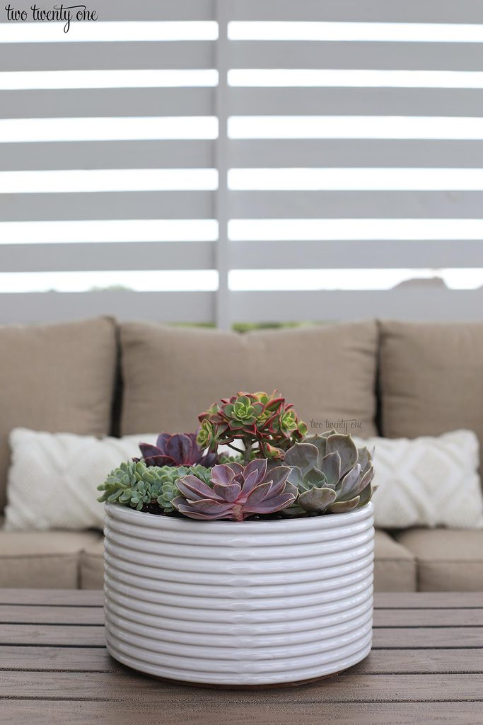 succulents in white planter