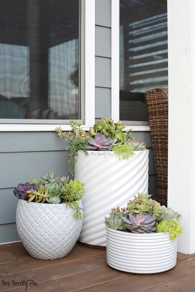 succulents in white planters