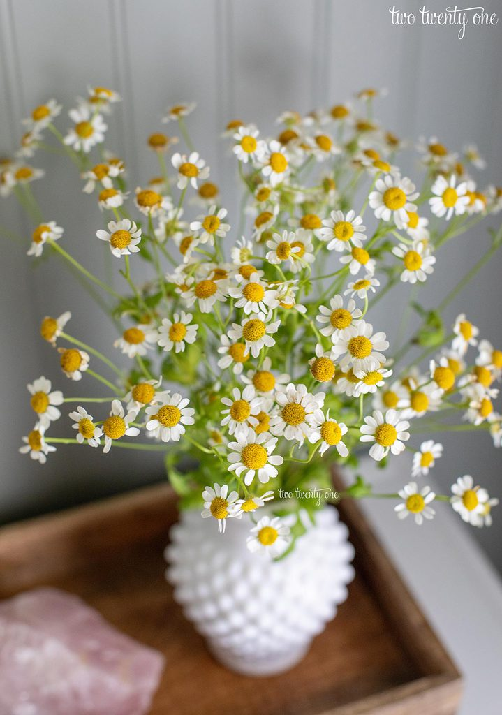 chamomile flowers in a white hobnail vase