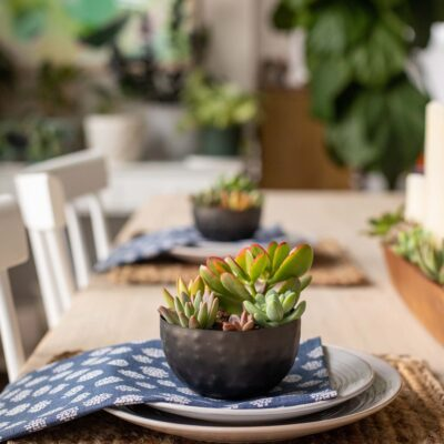 Succulent Planter Ideas for a Table Setting